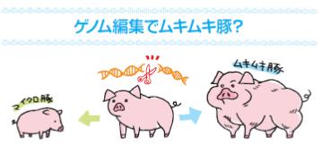私たちはモルモット?!ゲノム操作食品