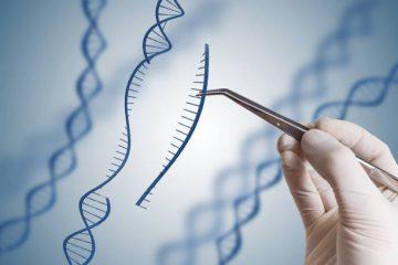遺伝子組換え食品は植物と動物をかけあわせている?!そのメリットとは…?