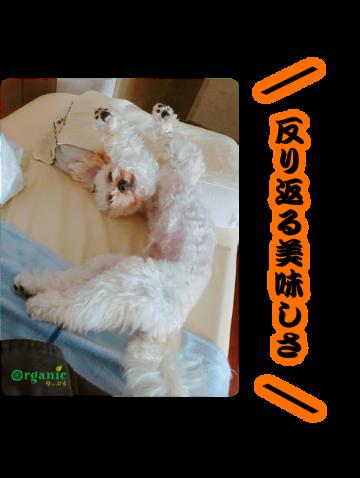 芸術的な曲線美、犬の寝相アート