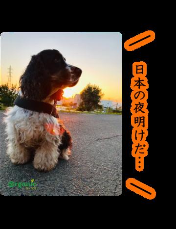 日本の夜明けは…
